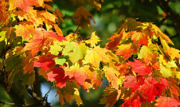 Herbst – Gut gelaunt durch die dunkle Jahreszeit