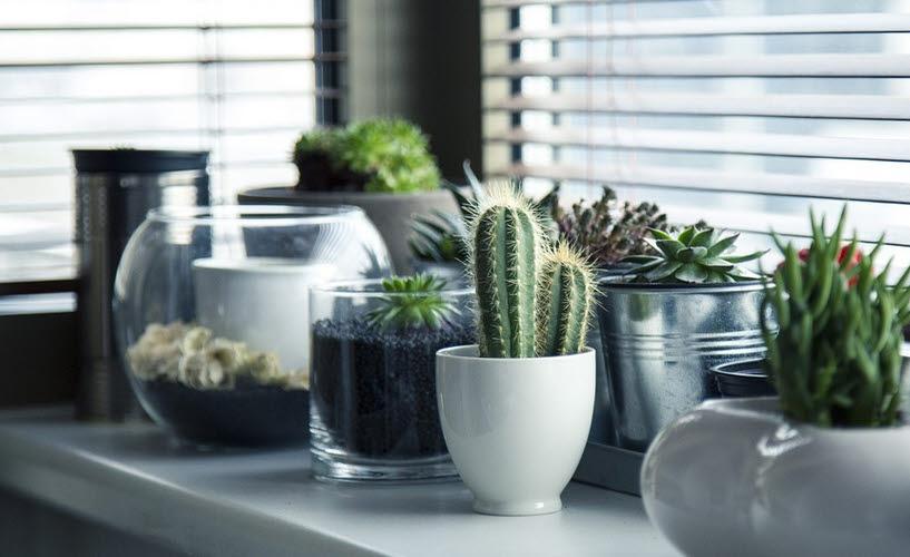 Für jede Pflanze der passende Topf
