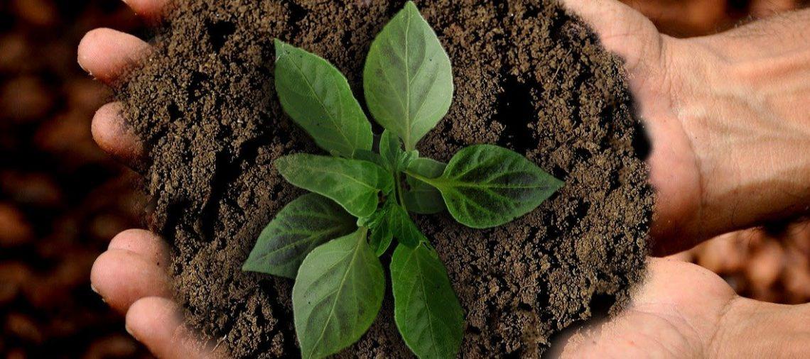 Immer mehr Startups werben mit Nachhaltigkeit