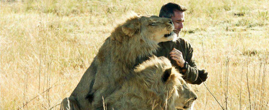 Zwei Löwen auf Reisen – Heimkehr nach Afrika