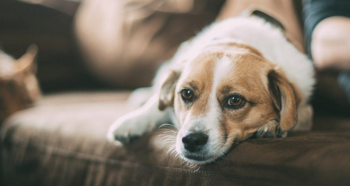 Wie alt können Hunde werden?