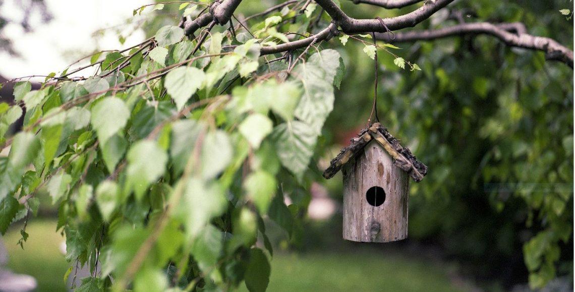Die neue Lust am eigenen Garten